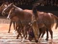 Equita Longines Le Salon du Cheval de Lyon_0824s.jpg
