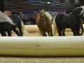 Equita Lyon 2017 _ Cabaret Equestre_20171101_2388 _ Troupe JEHOL - Copyright Gerard SANCHEZ-ALLAIS.jpg