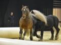 Equita Lyon 2017 _ Cabaret Equestre_20171101_2392 _ Troupe JEHOL - Copyright Gerard SANCHEZ-ALLAIS.jpg