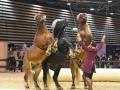 Equita Lyon 2017 _ Cabaret Equestre_20171101_2401 _ Troupe JEHOL - Copyright Gerard SANCHEZ-ALLAIS.jpg
