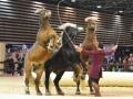 Equita Lyon 2017 _ Cabaret Equestre_20171101_2403 _ Troupe JEHOL - Copyright Gerard SANCHEZ-ALLAIS.jpg