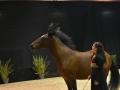 Equita Lyon 2017 _ Cabaret Equestre_20171101_2523 _ Gillianne SENN - Copyright Gerard SANCHEZ-ALLAIS.jpg