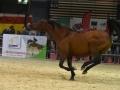 Equita Lyon 2017 _ Cabaret Equestre_20171101_2557 _ Gillianne SENN - Copyright Gerard SANCHEZ-ALLAIS.jpg
