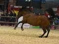 Equita Lyon 2017 _ Cabaret Equestre_20171101_2558 _ Gillianne SENN - Copyright Gerard SANCHEZ-ALLAIS.jpg