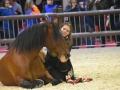 Equita Lyon 2017 _ Cabaret Equestre_20171101_2598 _ Gillianne SENN - Copyright Gerard SANCHEZ-ALLAIS.jpg