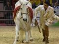 Equita Lyon 2017 _ Cabaret Equestre_20171101_2641 _ Mario STIVAL - Copyright Gerard SANCHEZ-ALLAIS.jpg