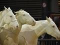 Equita Lyon 2017 _ Cabaret Equestre_20171101_2774 _ Iseulys DESLE - Copyright Gerard SANCHEZ-ALLAIS.jpg