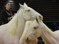 Equita Lyon 2017 _ Cabaret Equestre_20171101_2776 _ Iseulys DESLE - Copyright Gerard SANCHEZ-ALLAIS.jpg