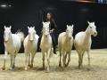 Equita Lyon 2017 _ Cabaret Equestre_20171101_2803 _ Iseulys DESLE - Copyright Gerard SANCHEZ-ALLAIS.jpg