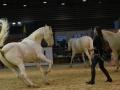 Equita Lyon 2017 _ Cabaret Equestre_20171101_2833 _ Iseulys DESLE - Copyright Gerard SANCHEZ-ALLAIS.jpg