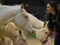 Equita Lyon 2017 _ Cabaret Equestre_20171101_2846 _ Iseulys DESLE - Copyright Gerard SANCHEZ-ALLAIS.jpg