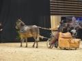 Equita Lyon 2017 _ Cabaret Equestre_20171101_2934 _ Troupe JEHOL - Copyright Gerard SANCHEZ-ALLAIS.jpg