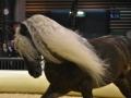 Equita Lyon 2017 _ Cabaret Equestre_20171101_2365 _ Troupe JEHOL - Copyright Gerard SANCHEZ-ALLAIS.jpg