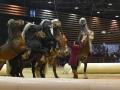 Equita Lyon 2017 _ Cabaret Equestre_20171101_2383 _ Troupe JEHOL - Copyright Gerard SANCHEZ-ALLAIS.jpg