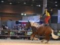 Equita Lyon 2017 _ Cabaret Equestre_20171101_2493 _ Gillianne SENN _ LES COMTOIS EN FOLIE - Copyright Gerard SANCHEZ-ALLAIS.jpg