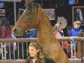Equita Lyon 2017 _ Cabaret Equestre_20171101_2602 _ Gillianne SENN - Copyright Gerard SANCHEZ-ALLAIS.jpg
